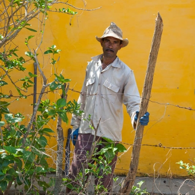 Farmer watching / Ruth Renters